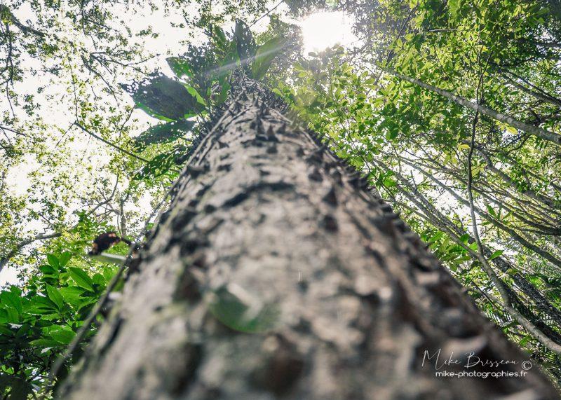 Costa Rica, Nature